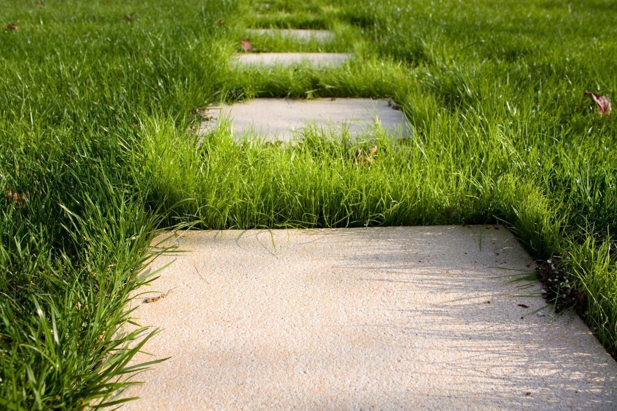 Paysagiste saint amand en puisaye dagonneau paysagiste for Service personne tonte pelouse